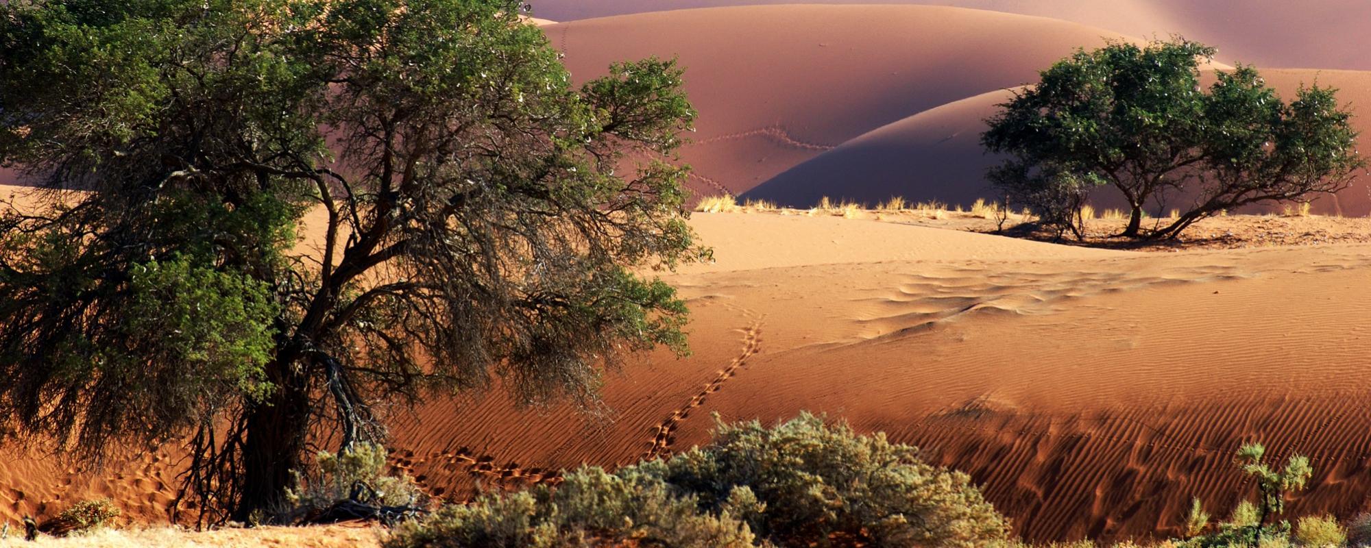 Namibia mit Kindern entdecken...